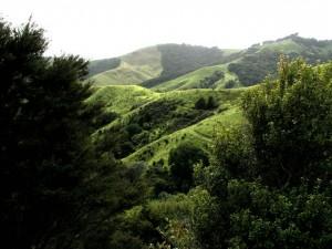 ニュージーランド英語の特有スラング(俗語)