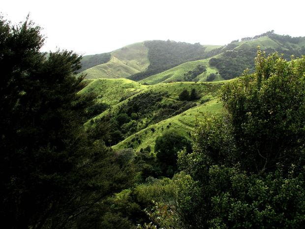 ニュージーランドに留学する方は必見!ニュージーランド英語の特有スラング(俗語)とボキャブラリーの紹介(パート1)