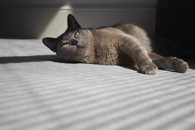 英語で「猫」という意味の「cat」の使い方