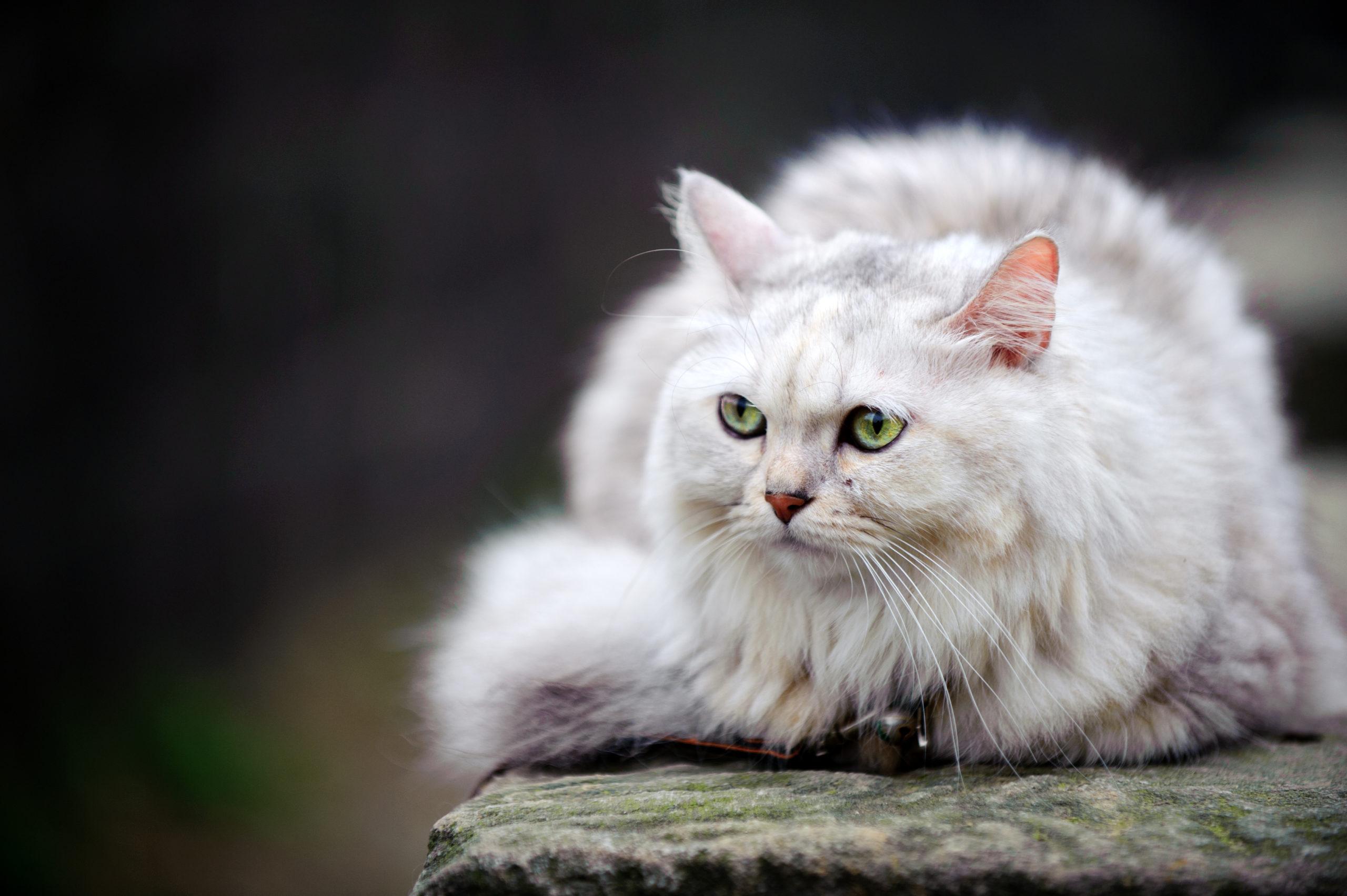 pussycat、puss、pussyの意味と使い方・ニュアンス