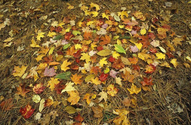fallとautumnはどう違いますか? 「秋」という場合にfallとautumnのどちらを使う?