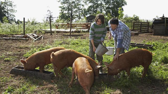「豚」は英語で何と言うの?「pig」以外の言い方やイディオム表現も紹介