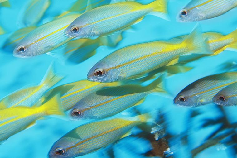 「fish」の複数形は「fish」