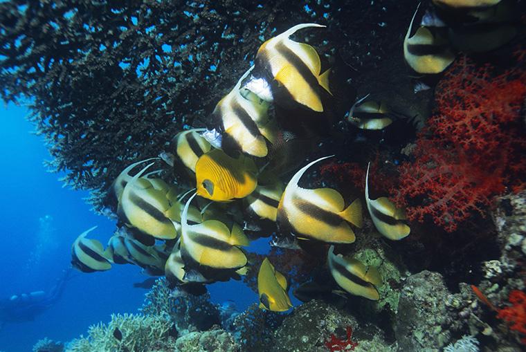 fish(魚)の複数形は何?「fish」か「fishes」のどちらが正しい?
