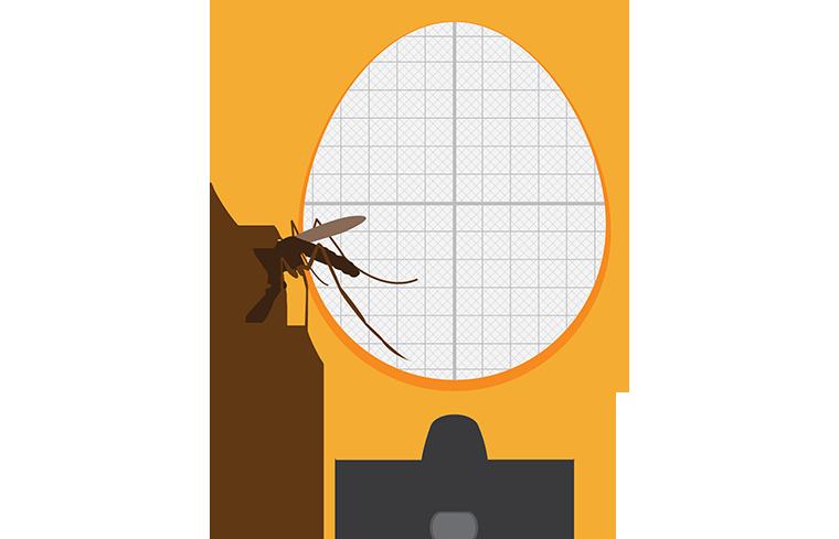 ラテン語ルーツの「蚊」という意味の英語「mosquito」の使い方