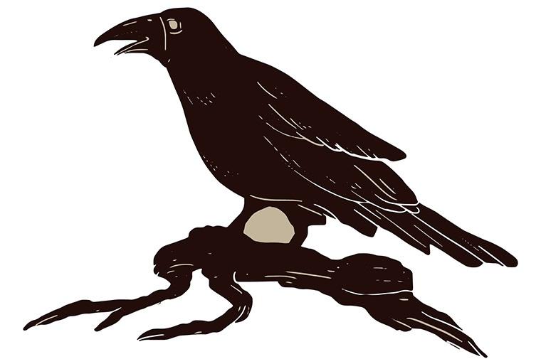 最もよく使う英語で「カラス(烏)」という意味の「crow」について