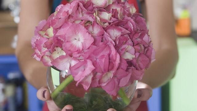 アジサイ(紫陽花)は英語で何と言う? フランス語とギリシャ語の由来の単語