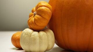 「かぼちゃ」は英語で何という?「pumpkin」か「squash」のどちらを使えば良い?