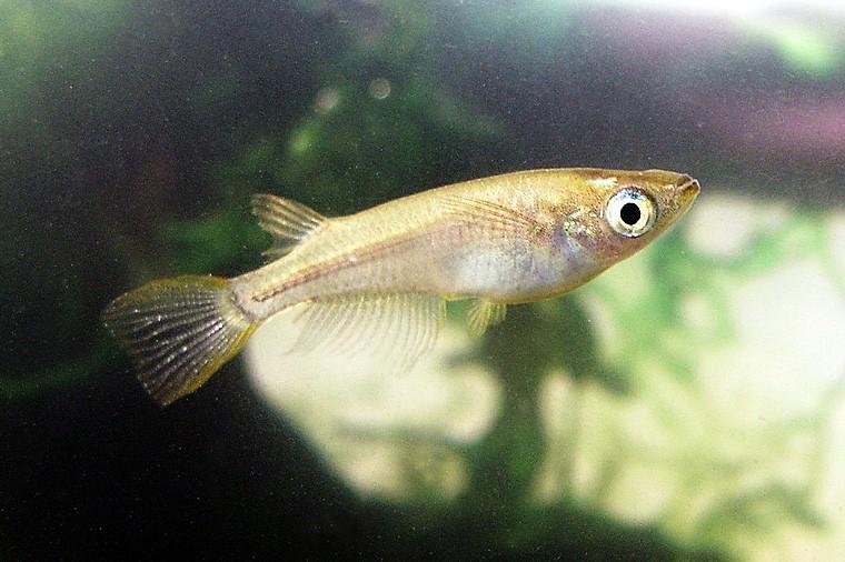 メダカは英語で何という? 水槽、熱帯魚、淡水魚、海水魚は英語で何?